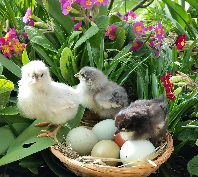 Ostern mit Silverudds